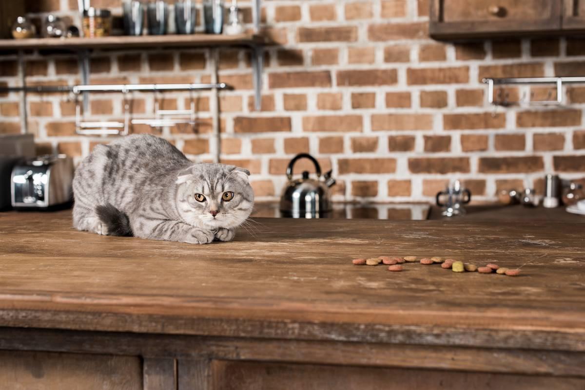 katze küche fressen