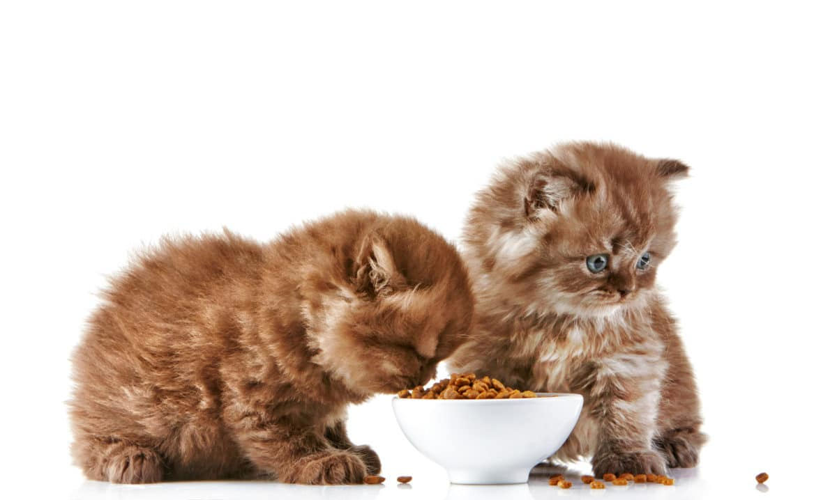 Kittenfutter