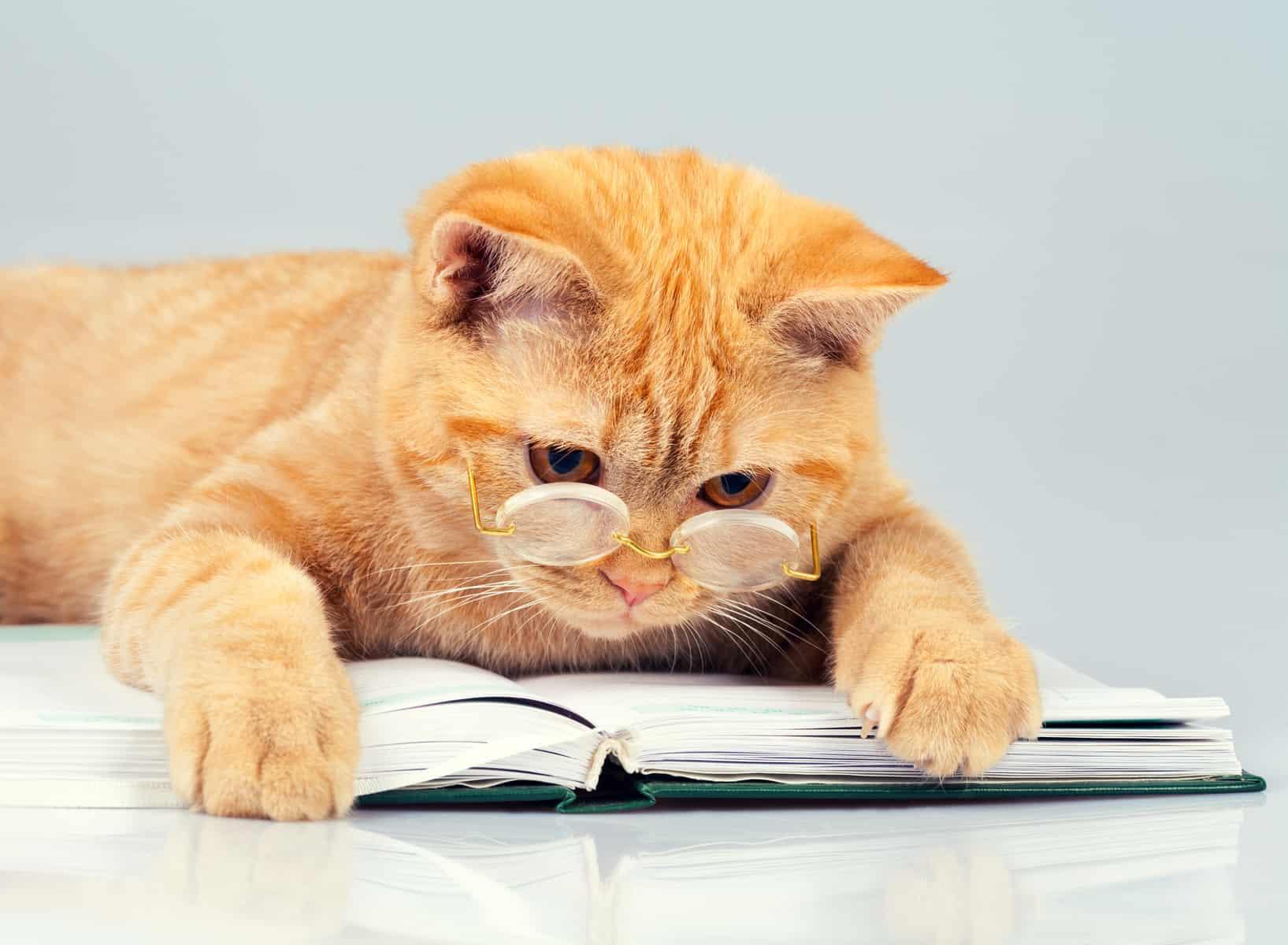 Katze liest Buch