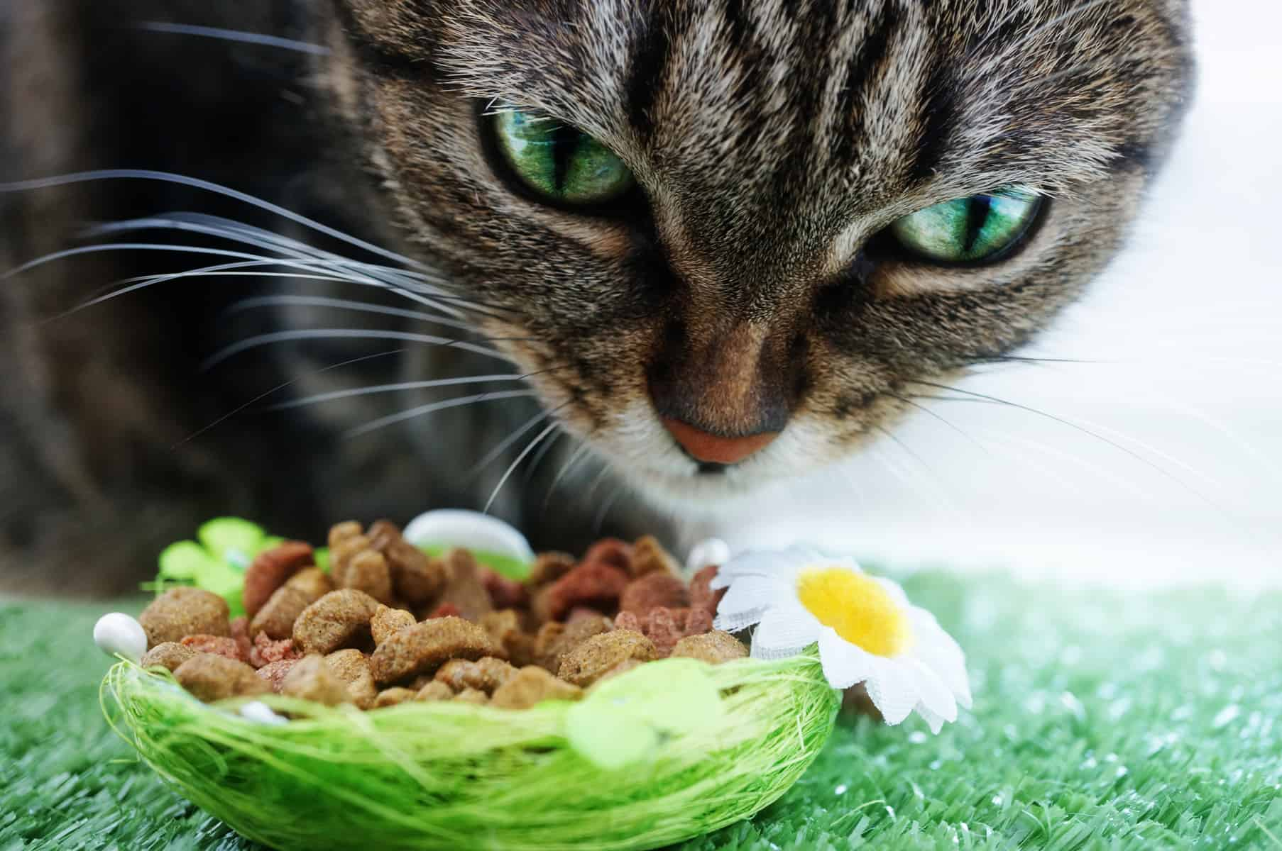 Katze mit grünen Augen