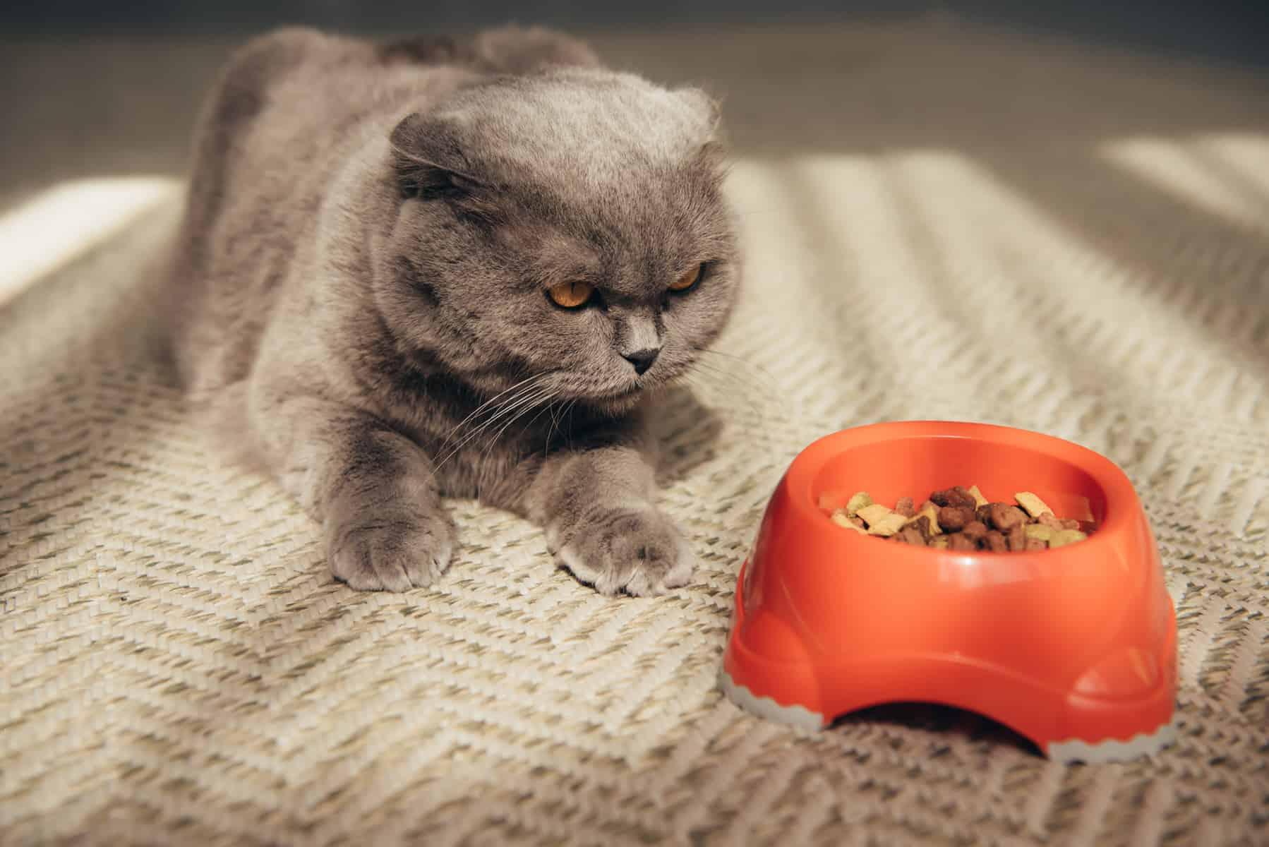 Katze schaut Fressen an